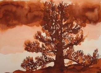 sequoia y fuego