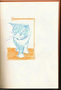 cat 13, Kiwi