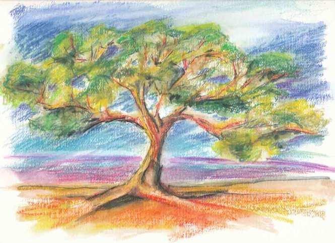 L'arbre qui regarde la mer