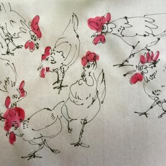 les poules 3