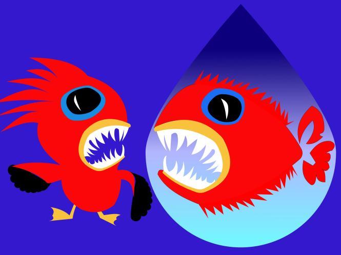 angry fish and angry bird